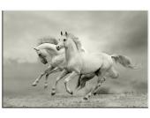 Leinwandbild, Home affaire, »Pferde im Galopp«, in 2 Größen